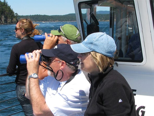 whale watching in the san juans