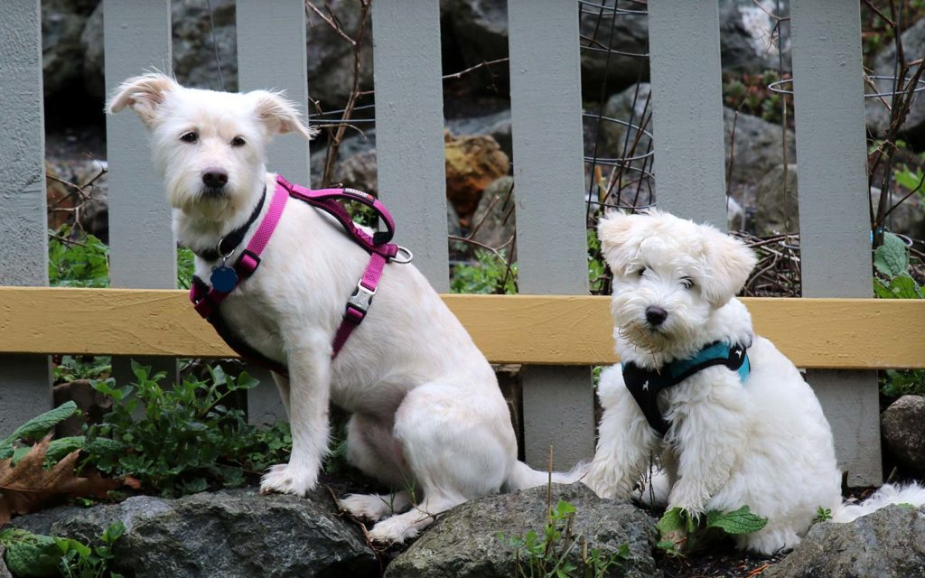 Pet Friendly Hotels in the San Juan Islands are Harrison House & Tucker House